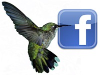 fb-hummingbird